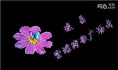 紫蝶踏歌广场舞最美最美