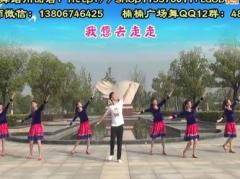 楠楠广场舞走中华 正背面演示与口令分解动作教学